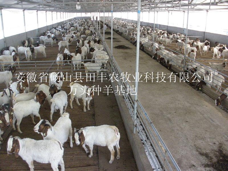 亚博国际app官方下载亚博app官网种羊